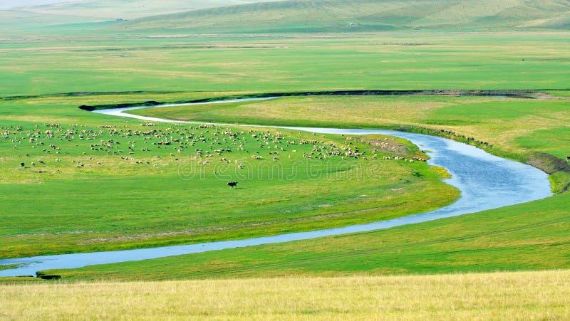 Pâturage de l'Inner Mongolia photo stock