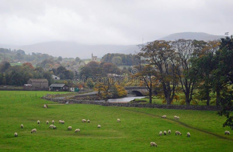 Pâturage de moutons de Swaledale de parc national de vallées de Yorkshire photo stock