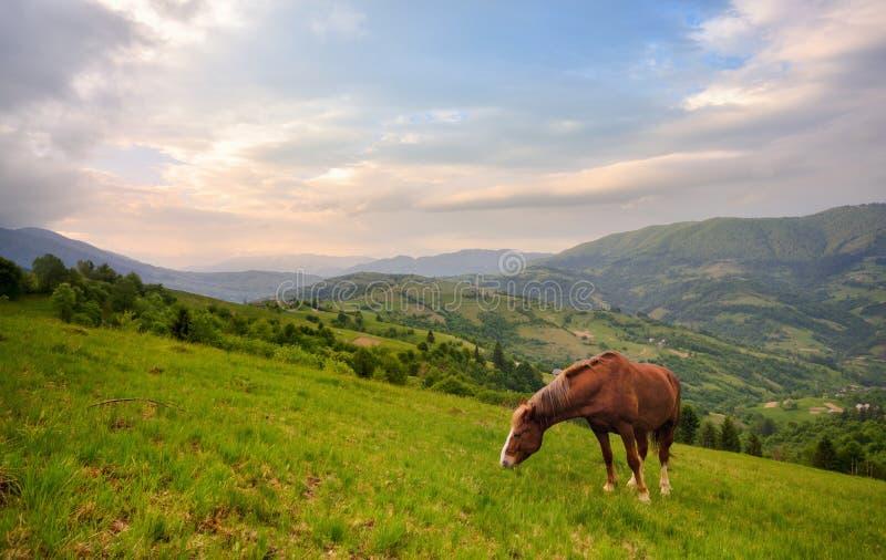 Pâturage du cheval Beau paysage rural de montagne avec un cheval rouge frôlant sur la pente verte Ressort en montagnes, frontière photo libre de droits