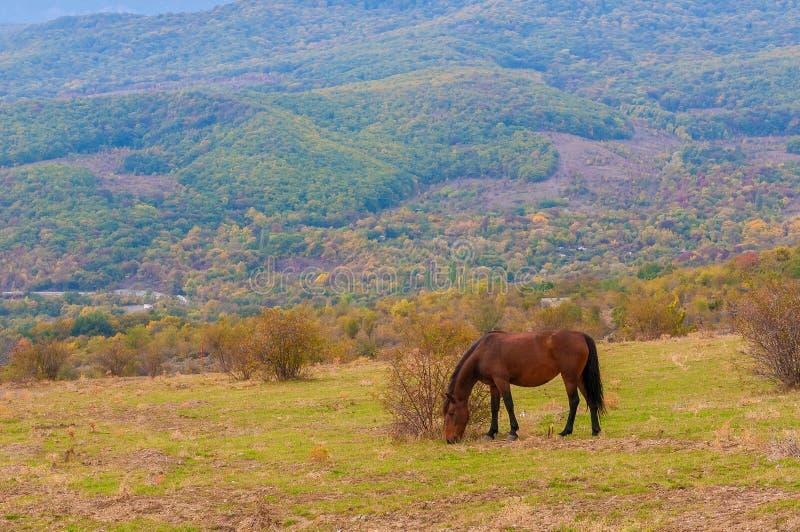 Pâturage du cheval sur un pâturage de montagne d'été photographie stock libre de droits