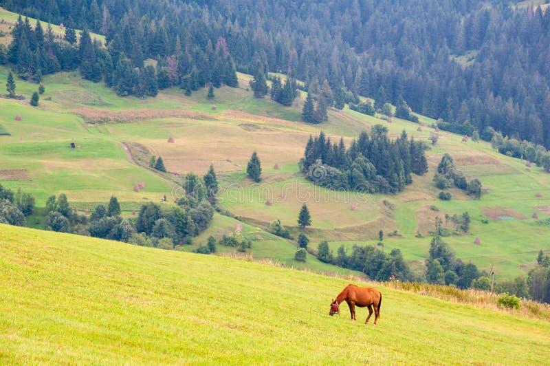 Pâturage du cheval sur un pâturage de montagne d'été Environnement écologique photos libres de droits