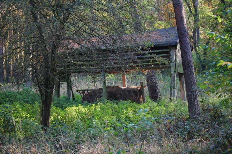 Pâturage pour animaux sauvages dans une forêt image stock