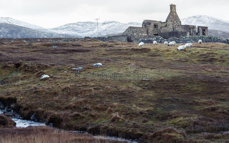 Pâturage sauvage avec les ruines images libres de droits