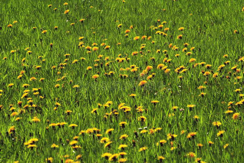 Download Pâturages Avec Les Fleurs 01 Photo stock - Image du fleur, prairie: 737818