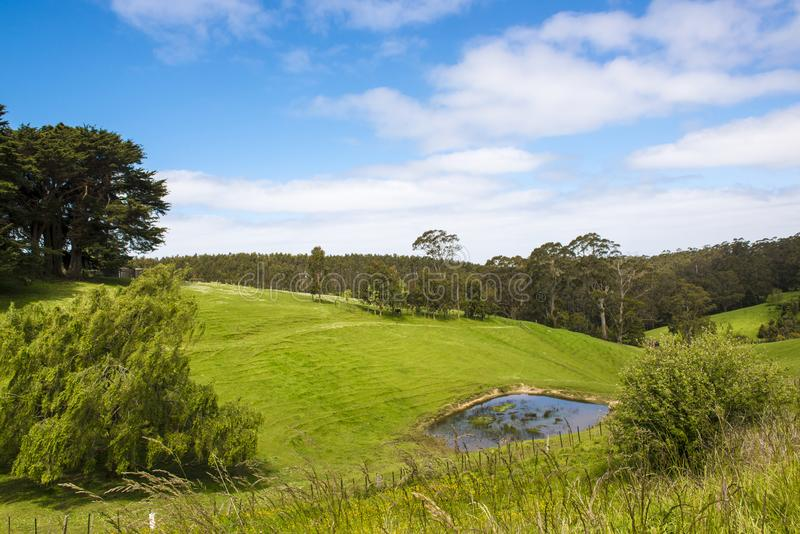 Pâturez dans l'Australie du sud, paysage rural typique près de grande route d'océan photo libre de droits