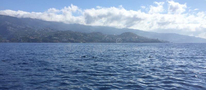 Pérola делает Atlântico стоковое фото rf