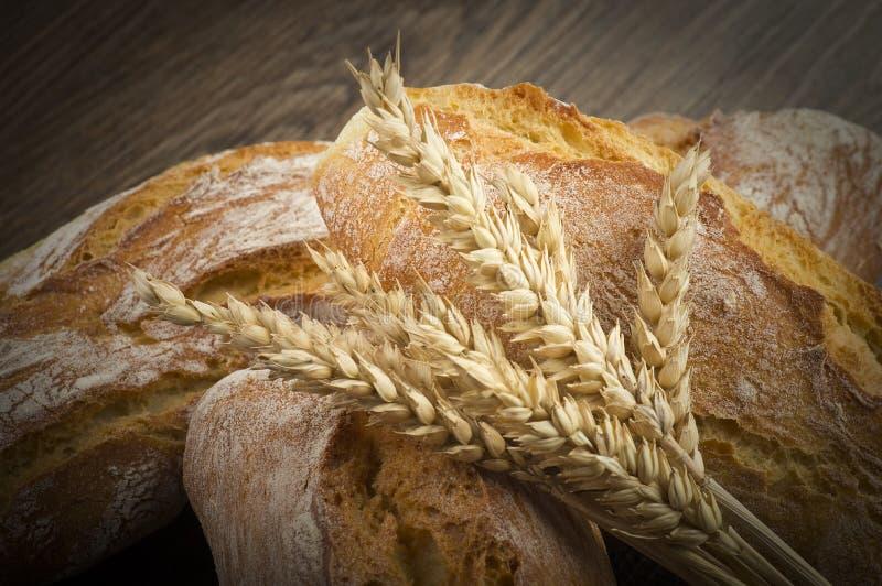 Pão de Ciabatta com as orelhas de milho fotografia de stock royalty free