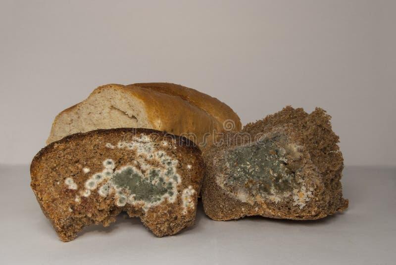 Pão do trigo e de centeio, coberto com o molde foto de stock