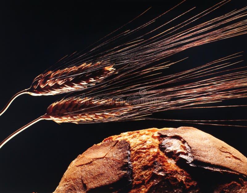 Pão e trigo imagem de stock