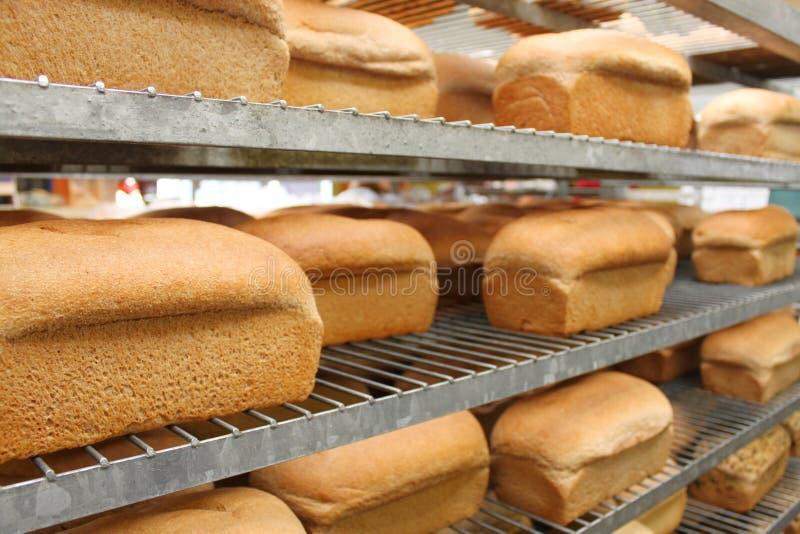 Pão fresco imagem de stock royalty free
