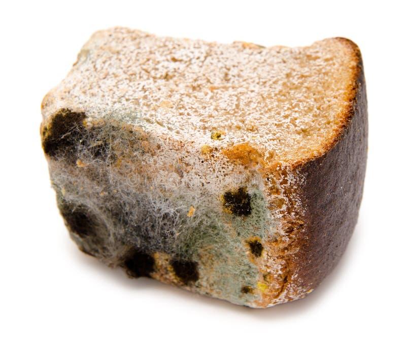 Pão Mouldy imagem de stock