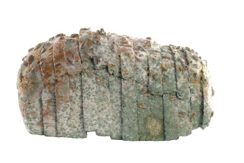 Pão Mouldy isolado fotos de stock