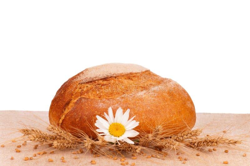 Pão redondo fotos de stock