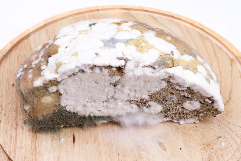 Pão tóxico imagem de stock