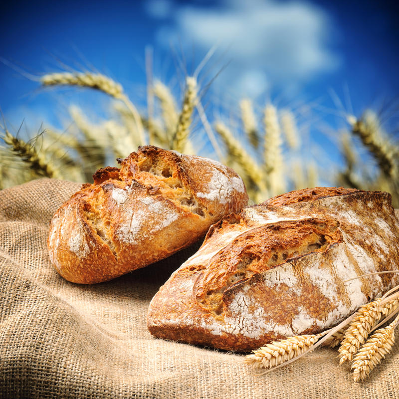 Pão tradicional recentemente cozido com campo de trigo no fundo fotografia de stock
