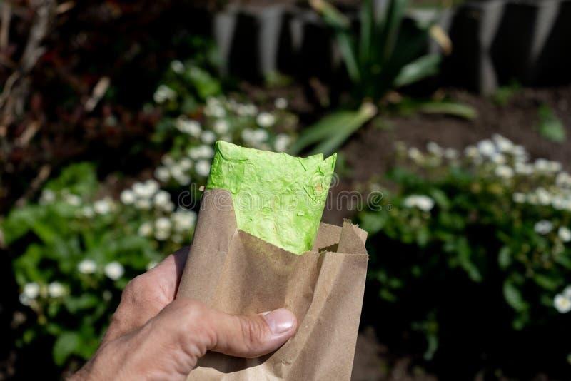 Pão verde do pão árabe, shaurma, shaverma, no espeto, doner Shawarma no close up masculino da mão foto de stock