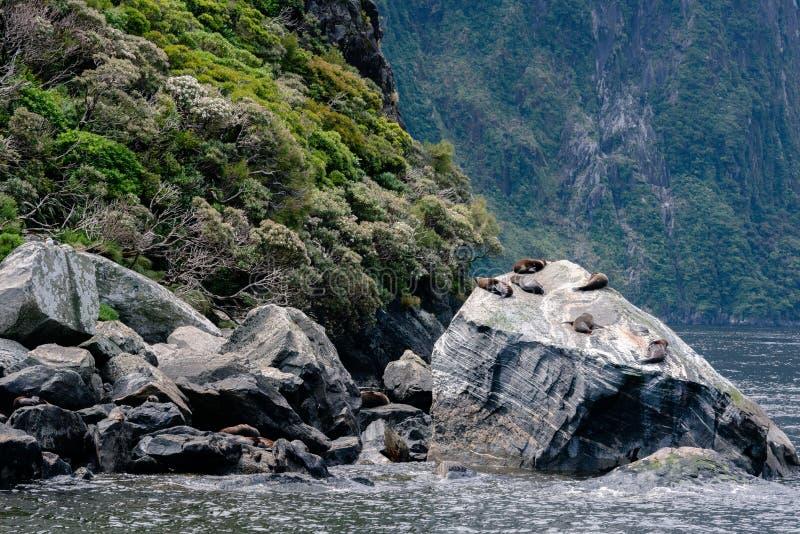 Pälsskyddsremsa som är ny ut ur vattnet arkivfoton