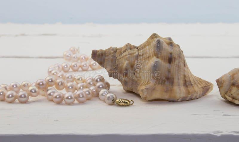 Pärlemorfärg halsband för rosa färger på vit wood bakgrund med skalet royaltyfria bilder