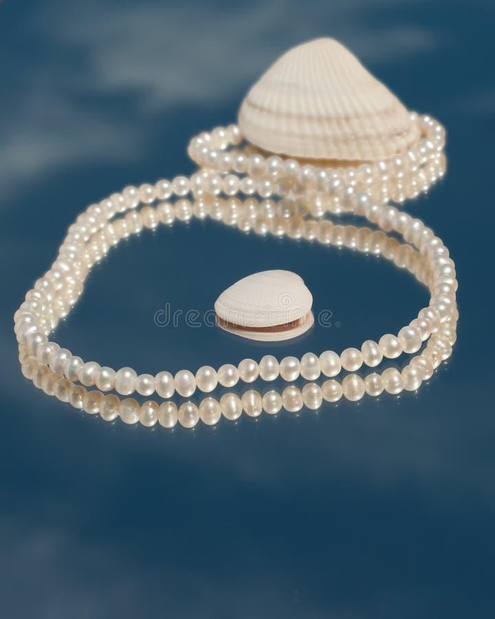 Pärlemorfärg halsband i diagram 8 med snäckskal royaltyfri bild