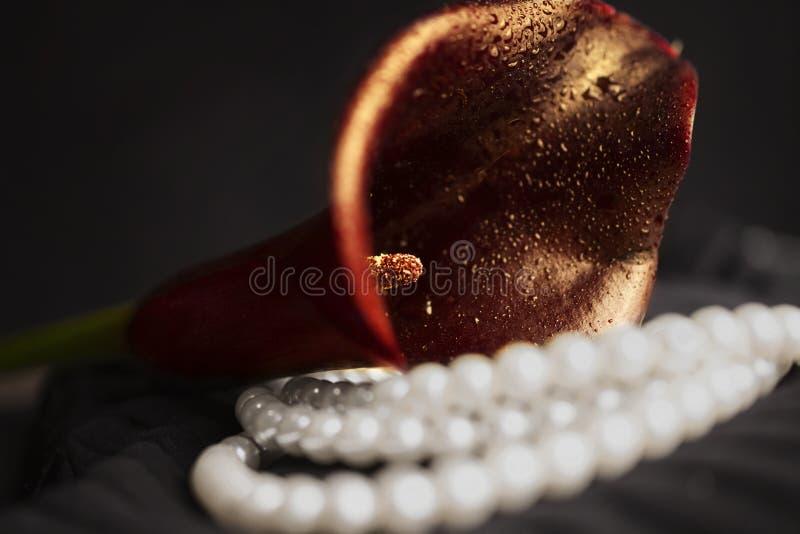 Pärlemorfärg halsband och röd callablomma arkivfoton