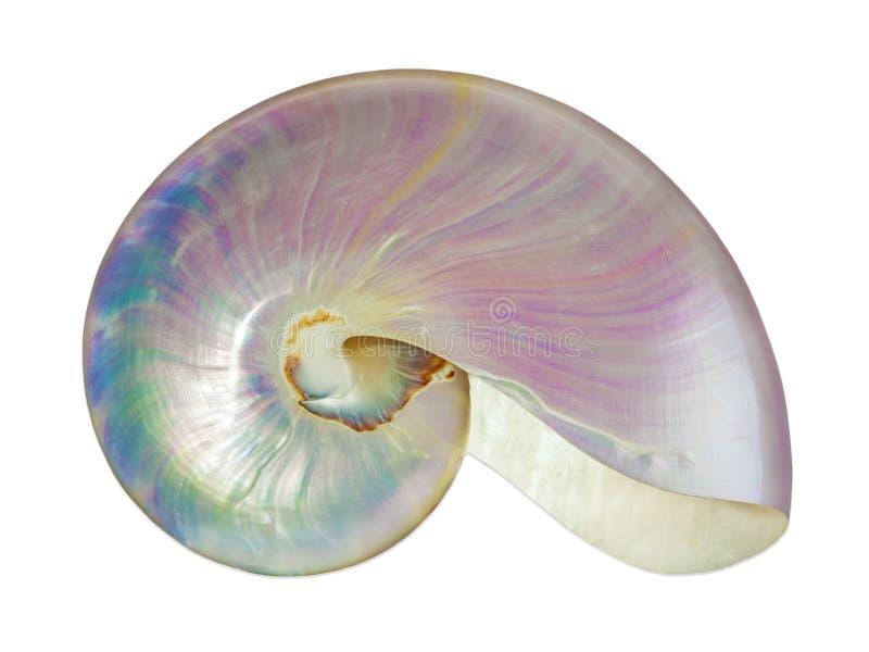 Pärlemorfärg skal av en nautilus. royaltyfria bilder