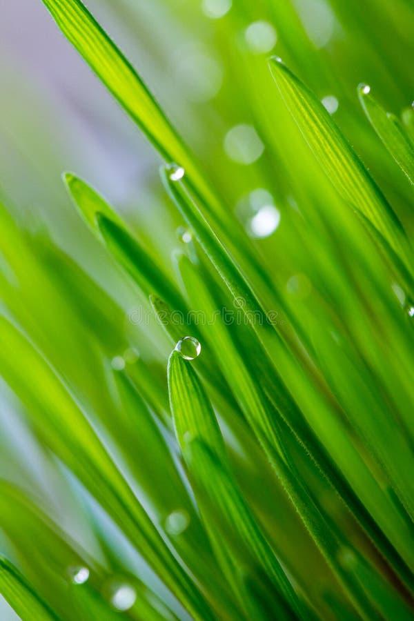 Pärlor på gräs arkivfoton
