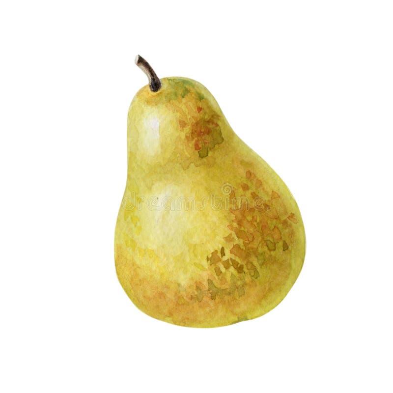 Päron för vattenfärg en Guling-gräsplan hel mogen frukt Illustration på sommar- eller hösttema stock illustrationer