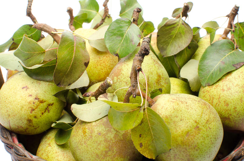 Päron med sidor i en korg royaltyfria foton
