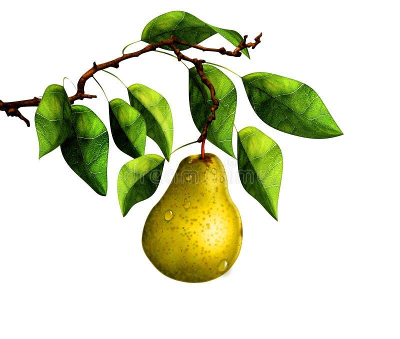 Päron på trädfilial royaltyfria bilder