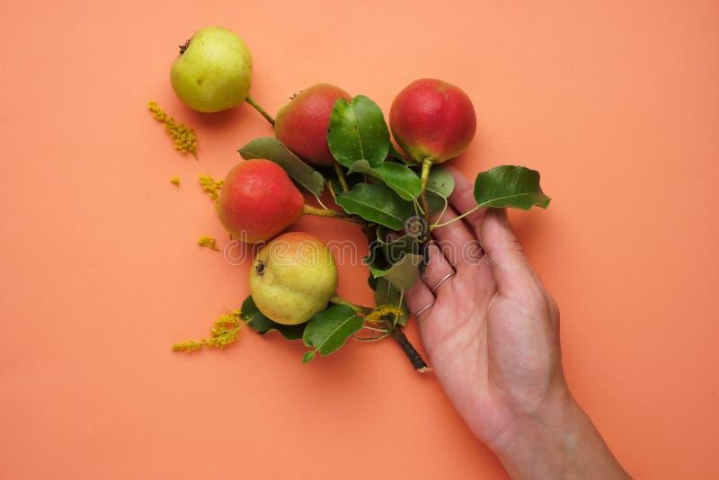 Päronen med en hand på den peachy lägenheten arkivbild