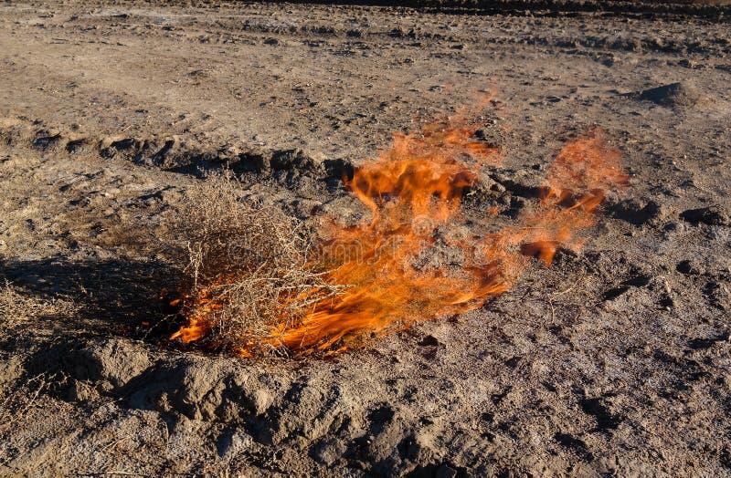 Płonący tumbleweed przy Aralcum pustynią jako łóżko poprzedni Aral morze, Karakalpakstan, Uzbekistan obrazy stock