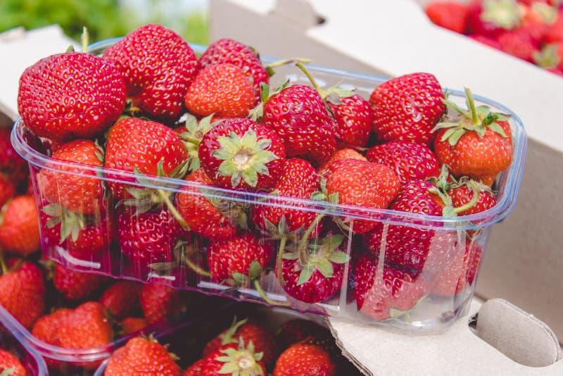 På asken är ett plast- magasin med nytt valda jordgubbar fotografering för bildbyråer