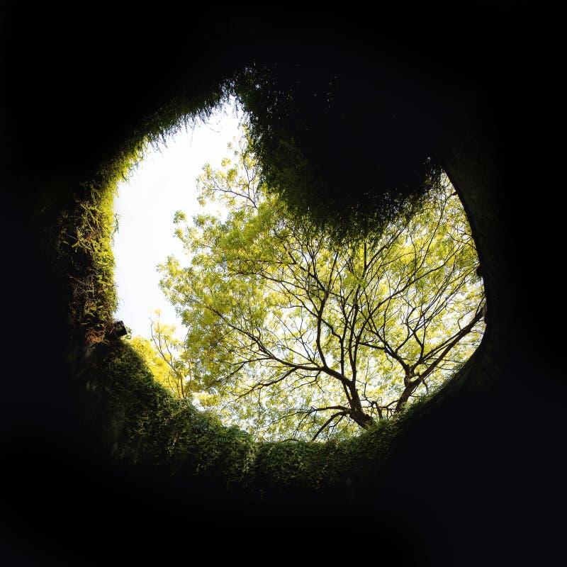 På burk för fort parkerar med inget Naturtunnel med träd i Singa fotografering för bildbyråer