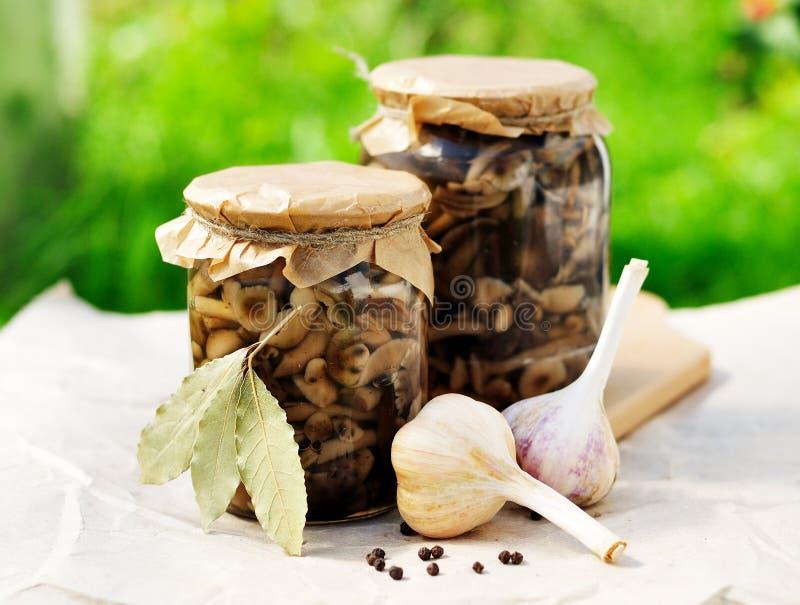 På burk marinerade Honey Fungus arkivfoton