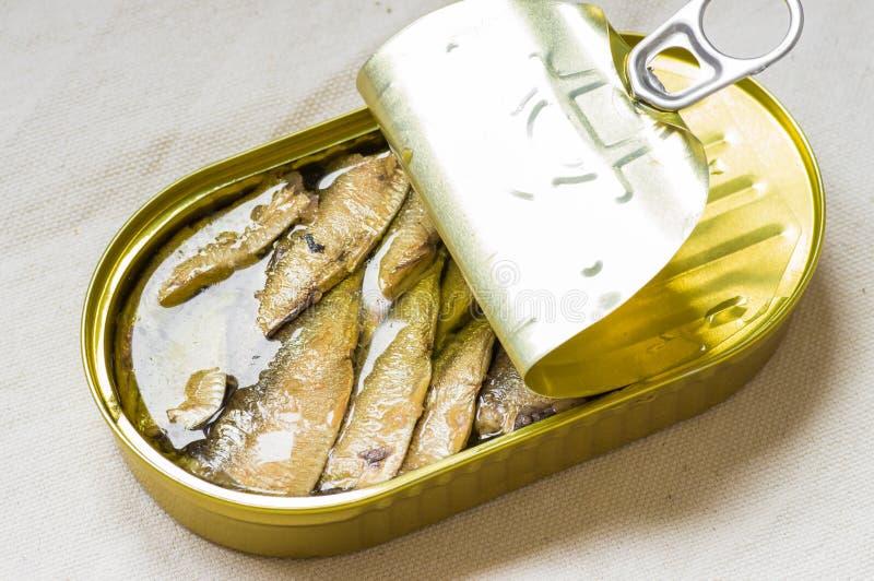 På burk sardiner för smaklig fisk i ett tenn royaltyfri bild