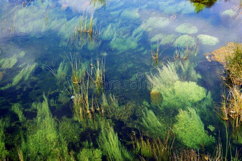 På de simma mindre fiskarna för grönaktig underkant royaltyfri foto