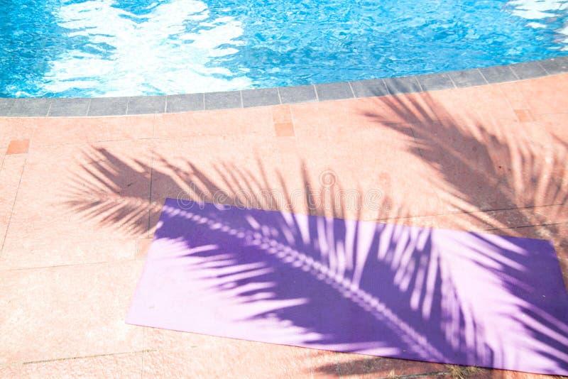 På den matta sporten är skugga från stora palmblad arkivfoto