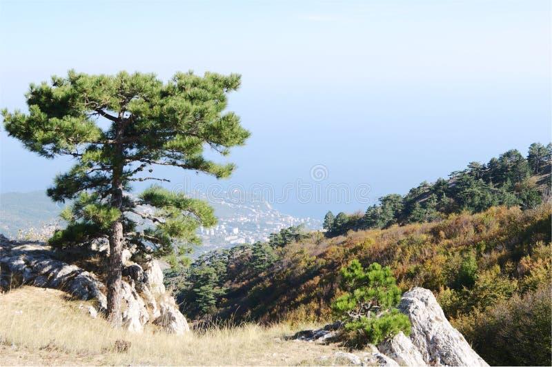 På denPetri platån bästa sikt av kusten, Krim royaltyfria bilder