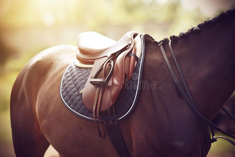 På en fjärdhäst är en sadel sliten på baksidan att utföra på rid- konkurrenser royaltyfria foton