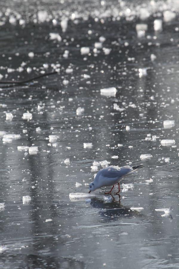 Is på en isbunden sjö arkivfoto