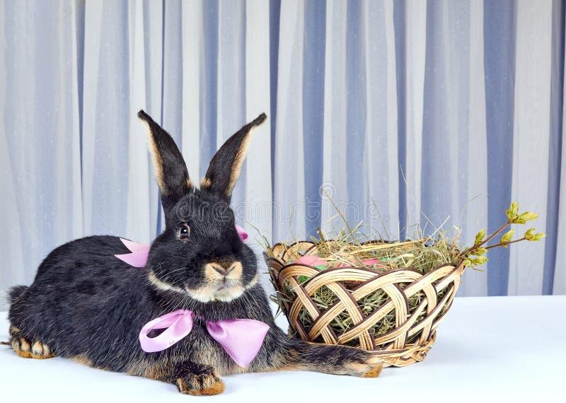 På en ljus bakgrund nära kaninen för påskkorglögner royaltyfri bild