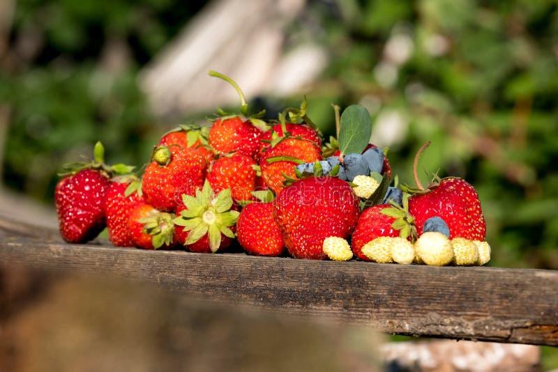 På ett gammalt träbräde finns det glidbanan för den olika bär, jordgubbar och den till salu lögnen för kaprifol på en suddig bakg royaltyfri bild