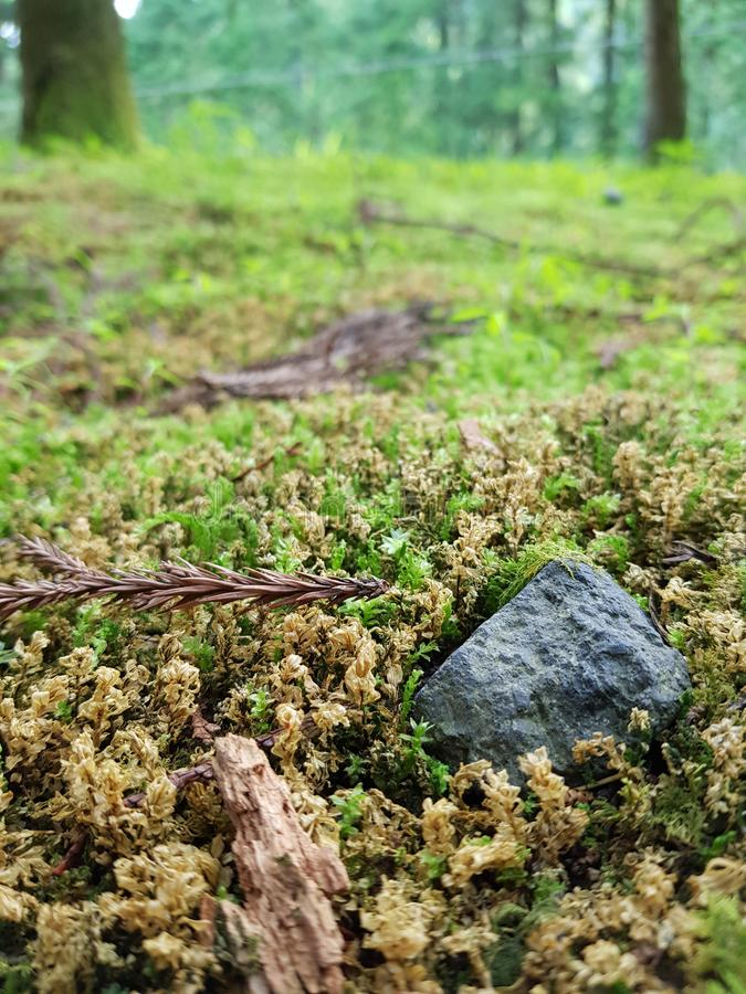 På gräsplanen fotografering för bildbyråer