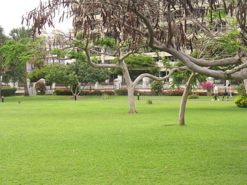 På gräsplanerna arkivfoto