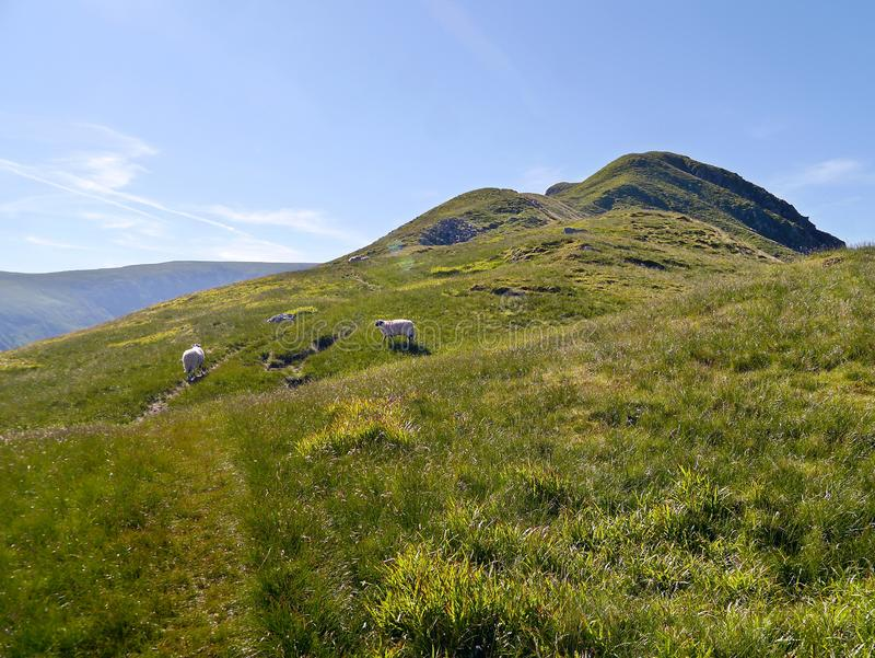 På Grey Crag nära Hartsop, Lake District arkivbilder
