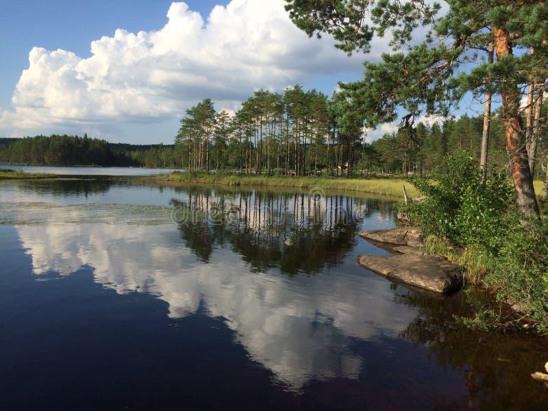På sjön i skogen royaltyfri foto