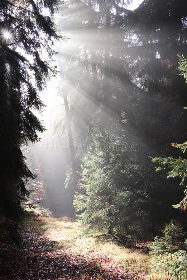 På skogbanan tidigt på morgonen arkivbild