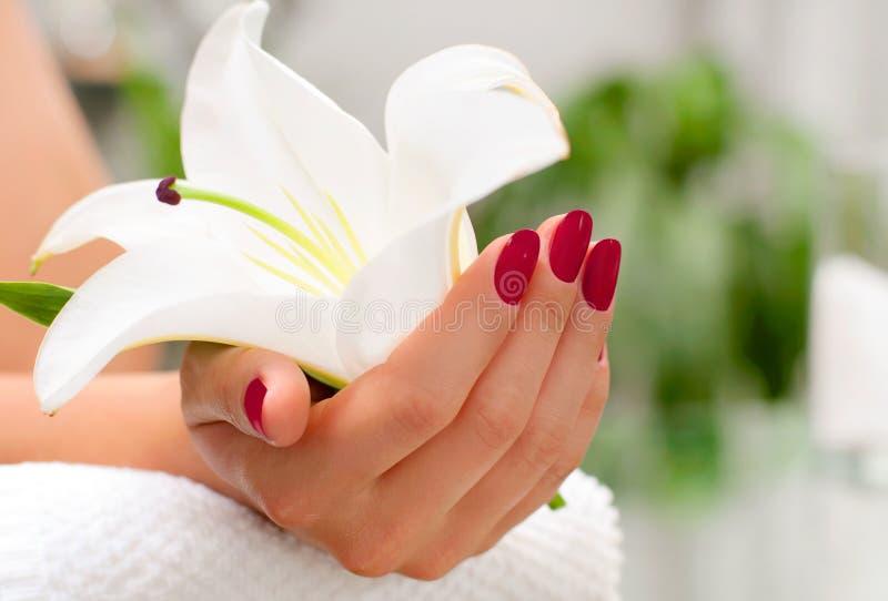 på white Härlig woman& x27; s-händer med perfekt manikyr på skönhetsalongen arkivbilder