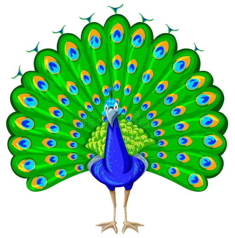 Påfågel med den färgrika fjädern stock illustrationer