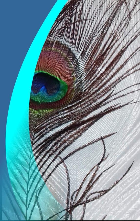Påfågelbl-fadern med abstrakta vektorblått skuggade bakgrund också vektor för coreldrawillustration royaltyfri illustrationer